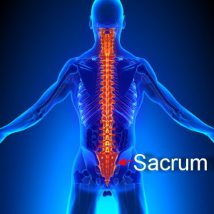 spine and sacrum image