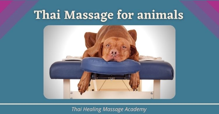 Thai Massage on animals