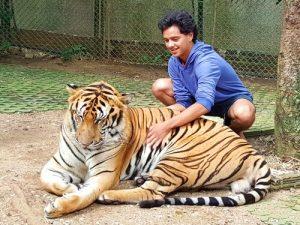 Chiang Mai's tiger kingdom